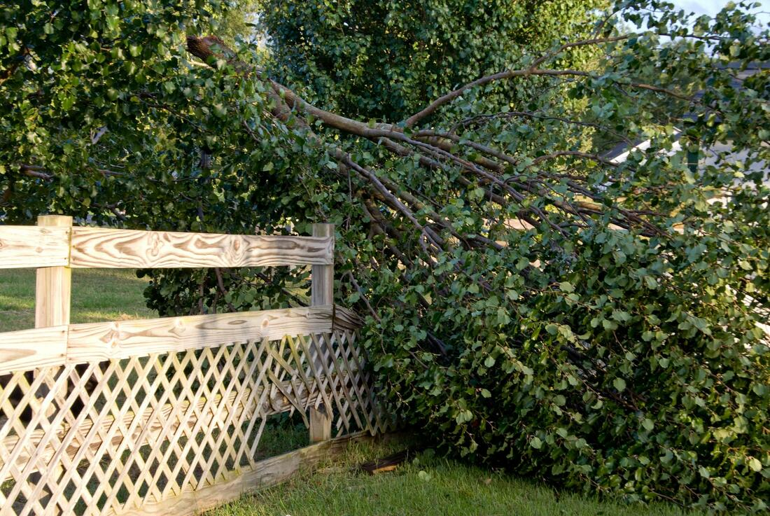 emergency tree removal orillia